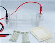 DYCP-31CN型瓊脂糖水平電泳儀(小號)