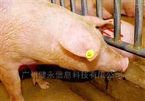 RFID通道式動物耳標識讀器讀寫器-畜牧養殖