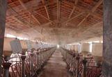 植物液养殖场喷雾除臭设备工作原理