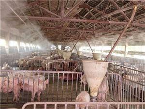 养殖场喷雾除臭