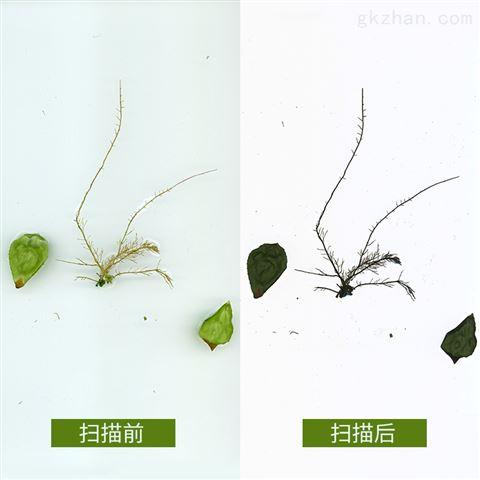 植物根系分析仪批发