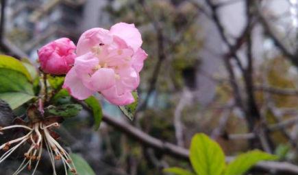 区块链应用遍地开花,制造业绽放绚丽光彩