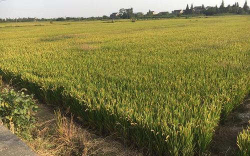 """啥是""""5G田""""?5G让智慧农业再迎新发展!"""