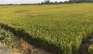 无人机降落农业有奇效,三应用助力行业迎丰收!