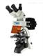 PH100-YG1落射荧光显微镜